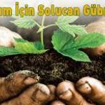 Uzman Solucan ve Organik Gübre