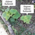 Zeynosol Solucan Gübresi