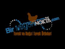 wyandotte tavuk ve doğal tavuk ürünleri