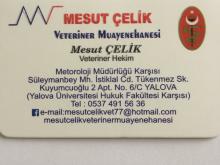 Mesut Çelik Veteriner Muayenehanesi